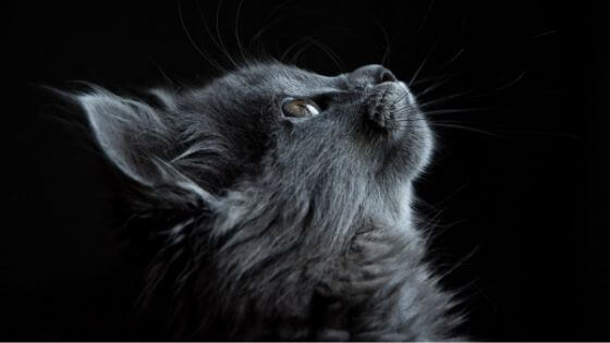 Mısır'da Kediler Neden Kutsaldı?