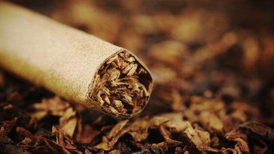 Tütün Nasıl Bulundu? Tütün Tarihi
